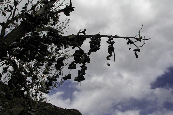 shoe tree on Ochoco Hwy 26