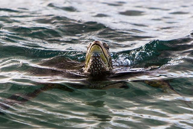 turtlejw