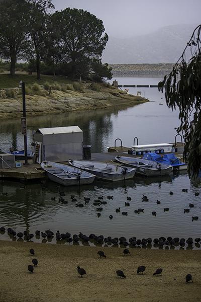 blueboats