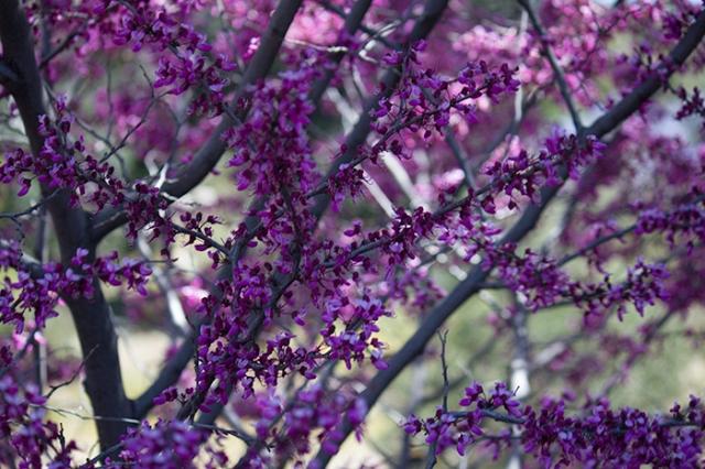 purple plant near parking lot