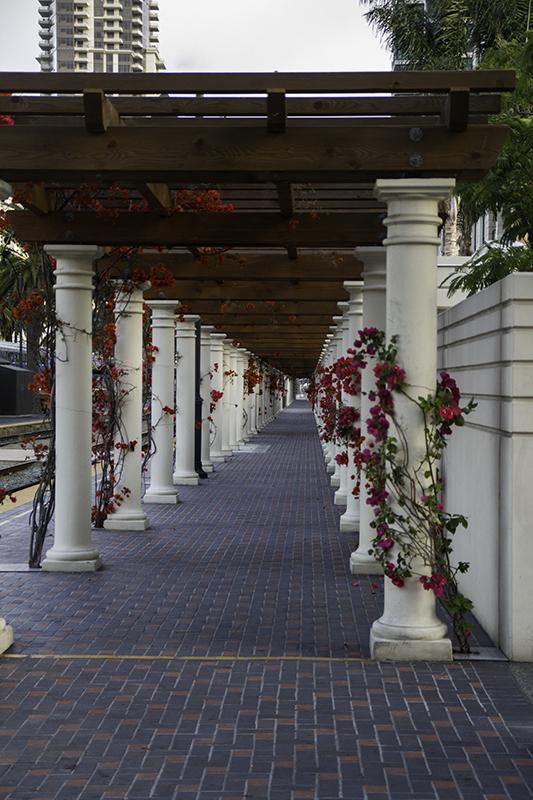 Fuchsia on Doric columns and trellis near train tracks