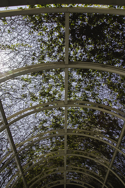 trellis at the convention center