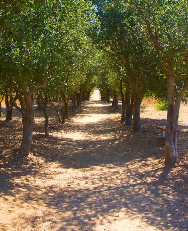 oak grove on trail
