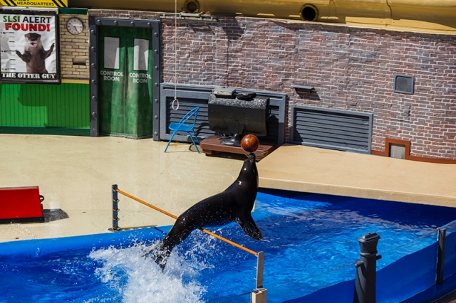 basketball competition at Sea Lions Live