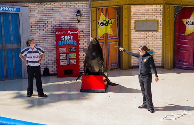 crime solving at Sea Lions Live