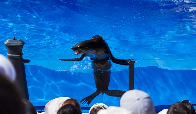 sea lion telling jokes at Sea Lions Live