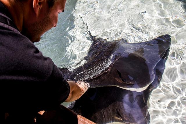 Piotr petting a manta ray