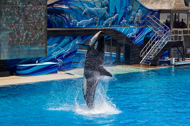 a spinning Orca