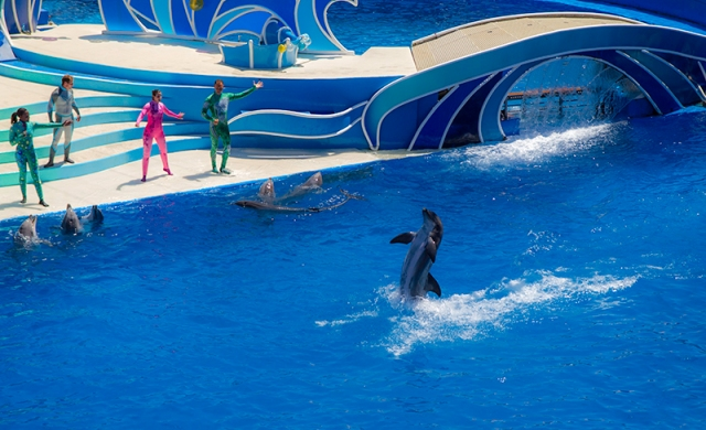dolphin walking on water at Blue Horizons