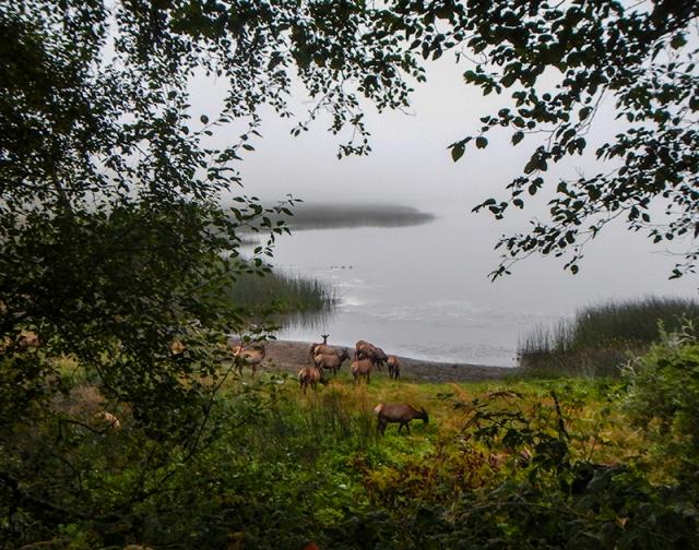 spying on elk - by Caleb