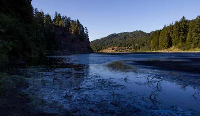 Eel River in the Redwoods