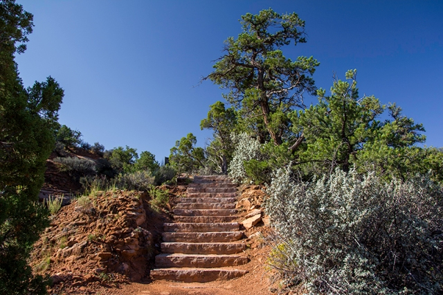 coming up the Aspen Trail in Navajo National Monument