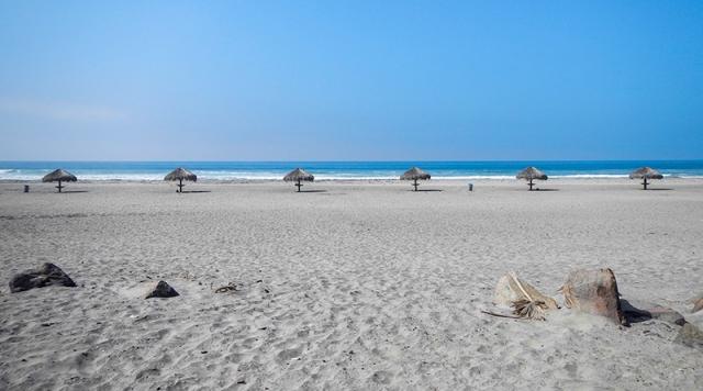 palm frond umbrella beach