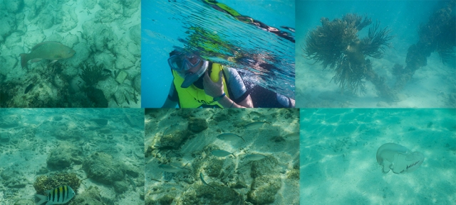 Caleb's underwater collage