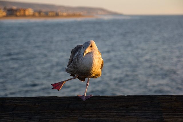 stretching seagull