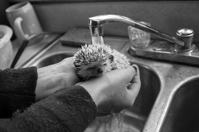 Harvey II getting a shower - photo by Caleb