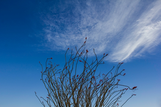 ocotillo touching the sky