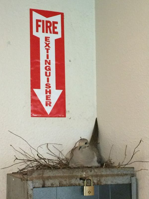 found a bird that puts out fire