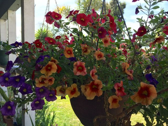 Dan's hanging flowers