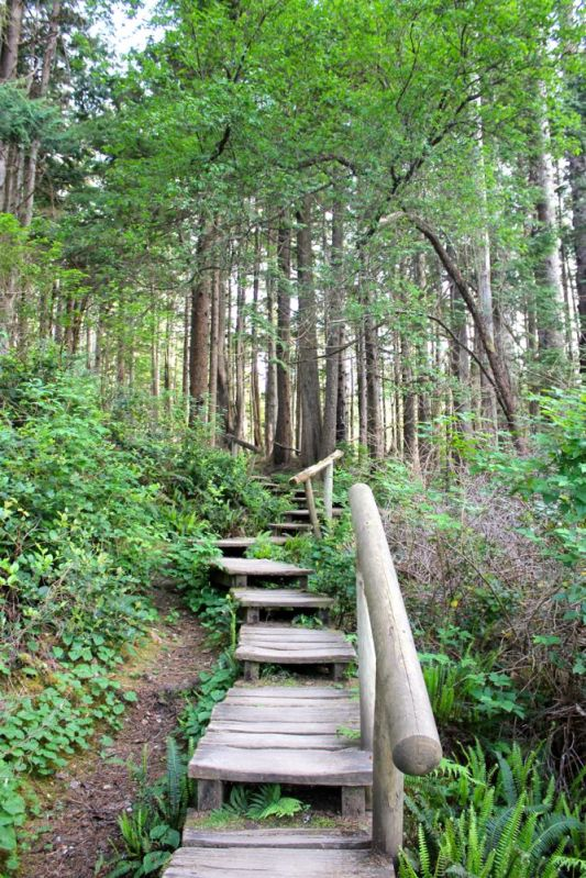 trail from Cape Flattery to the car