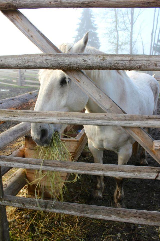 horse at Cottonwood House