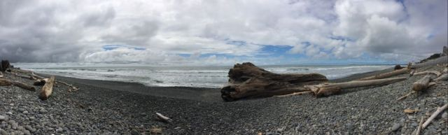 driftwood near Queets, WA