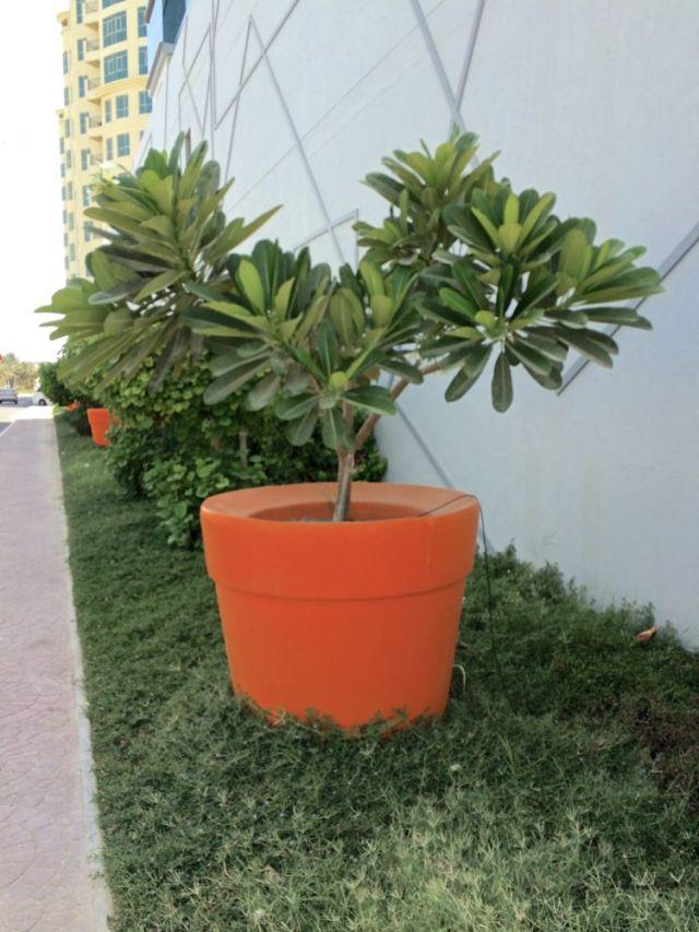 largest terracotta pot I've seen