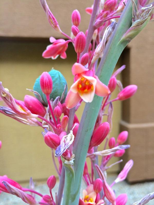Phoenix flora
