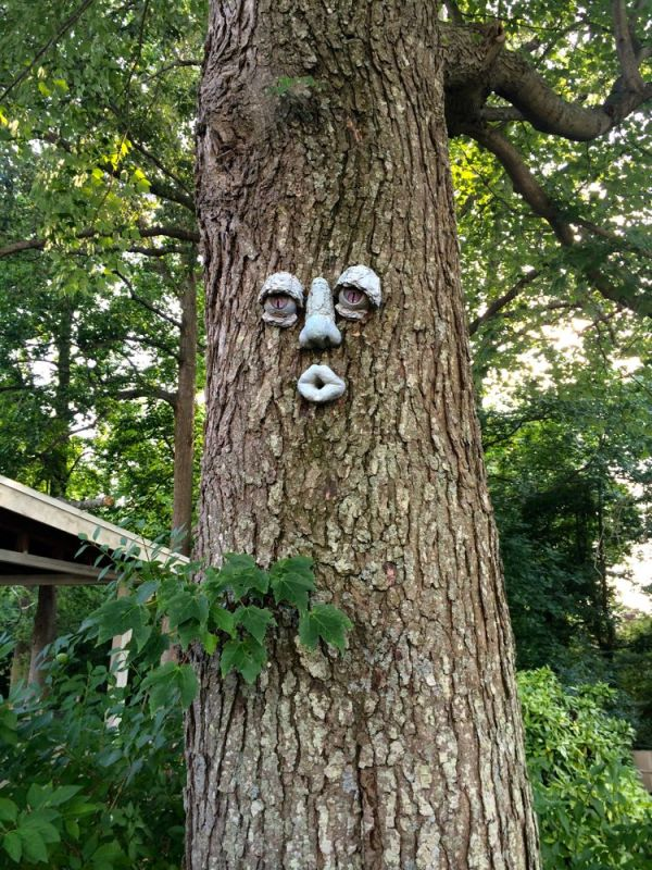 a friendly tree in Kris' yard