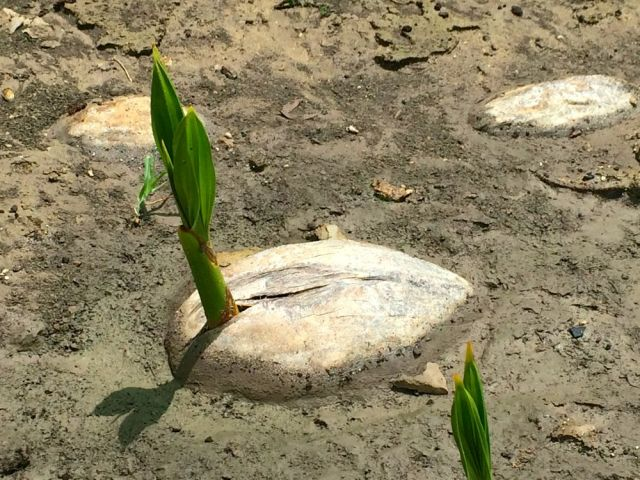a sprouting rock