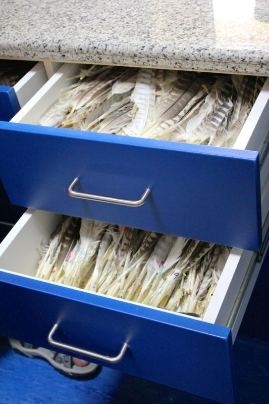 two drawers full of  labeled feathers