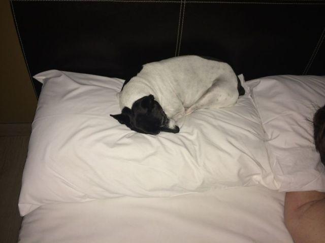 Piggy on my pillow
