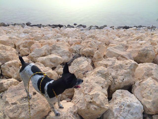 Sparky on the rocks