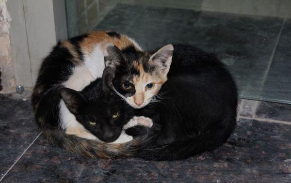 the cuddling kitten witnesses