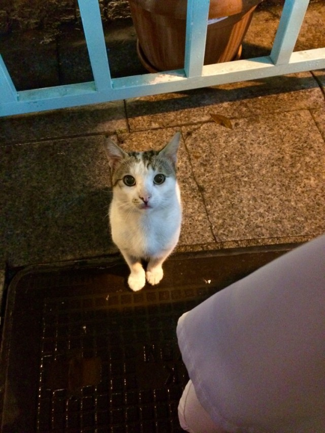 a guest at dinner